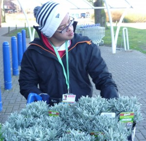 Student pushing a trolley of lavender and rosemary plants for our edible sensory garden