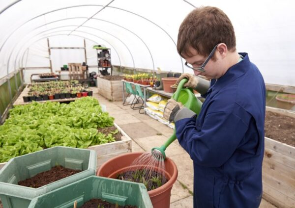 A work experience student doing horticulture in a polytunnel