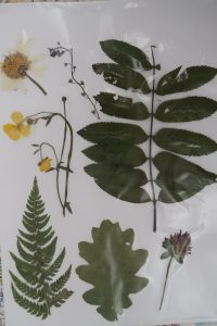 A display of leaves and flowers
