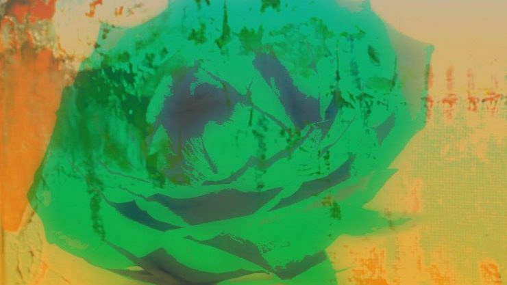 Abstarct image of a rose coloured bright green