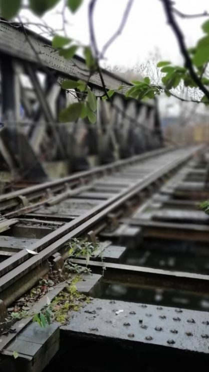 A close up of a train track, with plants growing at the side