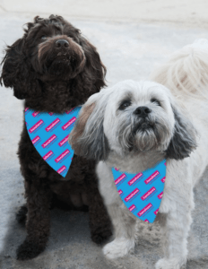 picture of two dogs wearing a blue and pink Henshaws Bandana