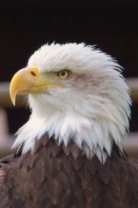Bird of Prey image. Credit to Unsplash; James Newcombe