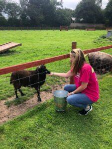 Image of staff member feeding a farm animal